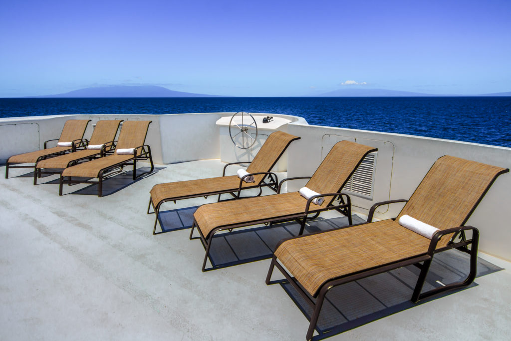 Treasure of Galapagos Lounge Chairs