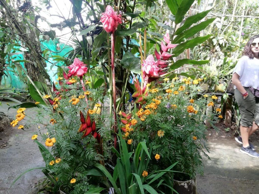 More orchids in Mindo