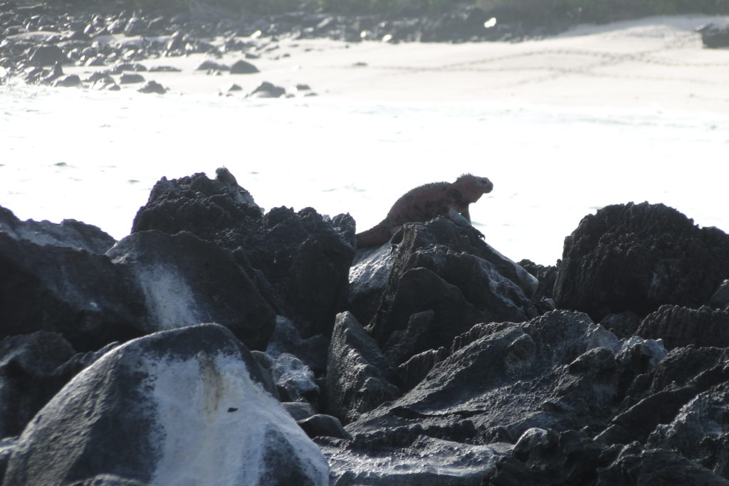 Comfortable Island Hopping