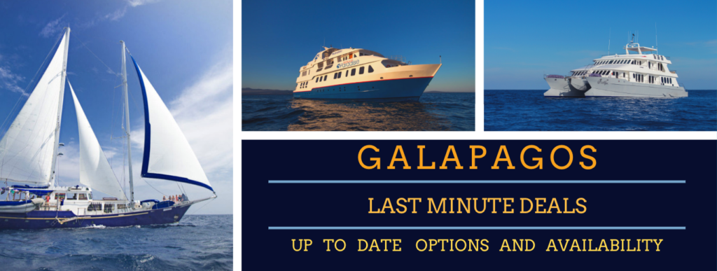 Galapagos Last Minute Cruise Deals