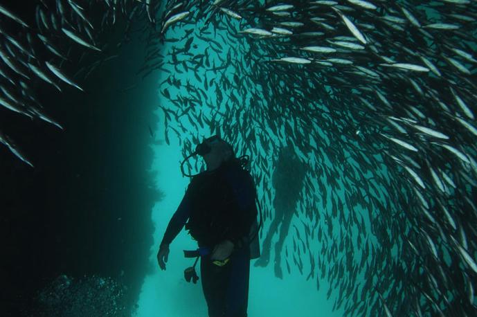 Diving Galapagos 1