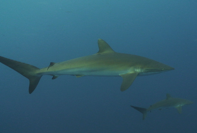 Diving Galapagos 6